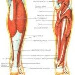 Lower Leg Muscle Cramps