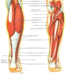 Lower Leg Muscle Cramps | Musculoskeletal Pain | Austin